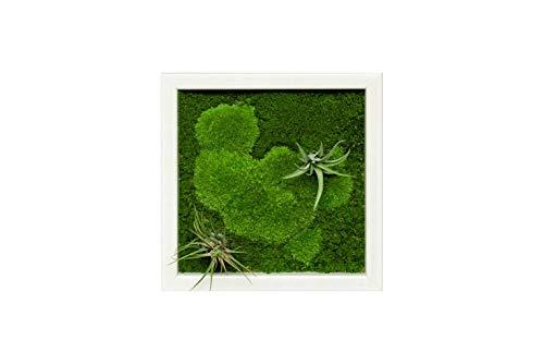 Pflanzenbild kaufen Moosbild mit lebenden Pflanzen Wandbild Moos Wanddeko Poster (Weiß, 35x35 cm)