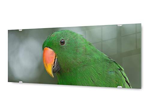 KD Dsign+ glasschilderij muurschildering GLX12557380084 papegaai vogel 125 x 50 cm/incl. nieuw ophangsysteem