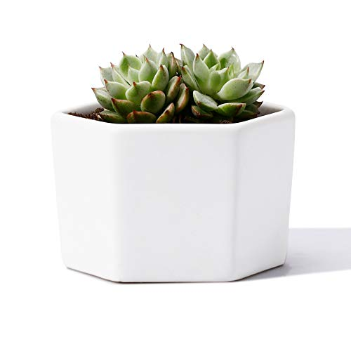 POTEY Mini Succulent Cactus Planter - 2.3 Inch Plant Containers Indoor Bonsai Pot Unglazed with Drain Hole - Hexagon, White