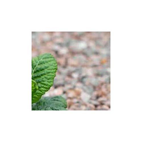 Tissu de contrôle des mauvaises herbes Multi Season Paysage paillis Membrane Coque 1.5 m x 1 m Drap.