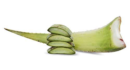 1 x Bestes Bio Aloe Vera Barbadensis Blätt, Health for All