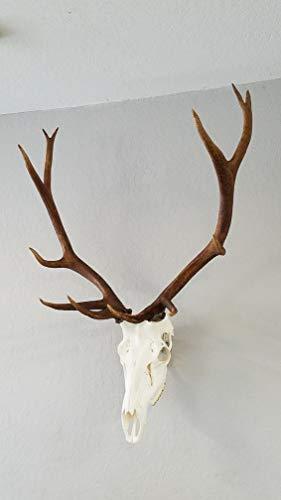 Top Rack European Skull Mount Hangers (ELK: Raging Bull)