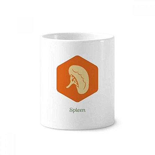 DIYthinker Körper innere Organe Milz Keramik Zahnbürste Stifthalter Tasse Weiß Cup 350ml Geschenk 9.6cm x 8.2cm hoch Durchmesser
