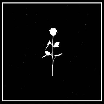 Last Nights Flowers