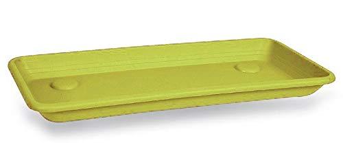 Blim Anthea Rectangular Plato, para Caja de Flores, Morado, 100cm
