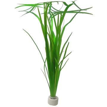 3 Bunde Vallisnerien, Vallisneria, Aquariumpflanze - 2
