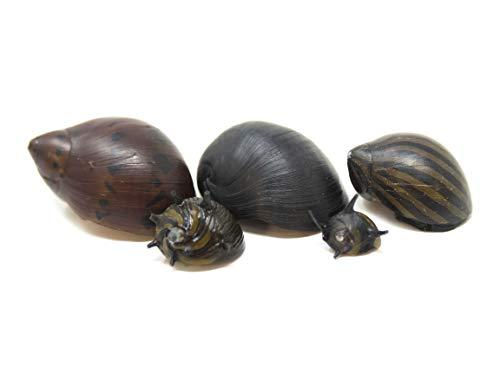 Aquatic Arts Deluxe Nerite Snail Combo Pack: 1 Zebra, 1 Tiger, 1 Sun Thorn, Zebra Thorn, Black Racer Snails | Freshwater Aquarium Control