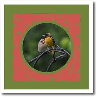 65a1cb931769c Amazon.com: Baltimore Orioles: Arts, Crafts & Sewing