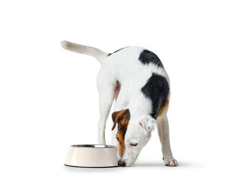 HUNTER Melamin-Napf, Futternapf, Trinknapf für Hunde und Katzen, herausnehmbarer Edelstahlnapf, 1400 ml, weiß