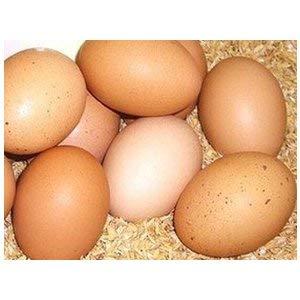 こだわりの平飼い有精卵(たいようの幸せたまご)10個 ※3パックセット※冷蔵