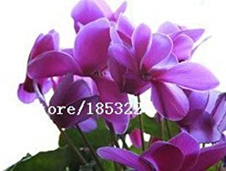 Best cyclamen plants for sale Reviews
