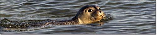 Lesezeichen aus Metall mit gerader Kontur | Seehund #9901008