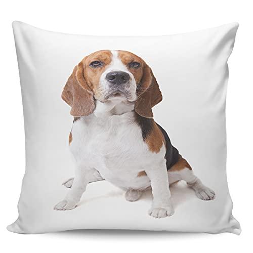 Scrummy Fundas de almohada de 66 x 66 cm, bonitas fundas de almohada decorativas para perros Beagle