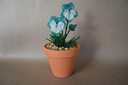 Flower Plants Seeds Deals You Don T Want To Miss Accuweather Shop