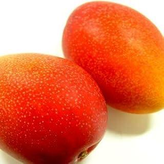 宮崎県産完熟マンゴー 2個入り (1個:230~300g) 宮崎マンゴー最高等級品