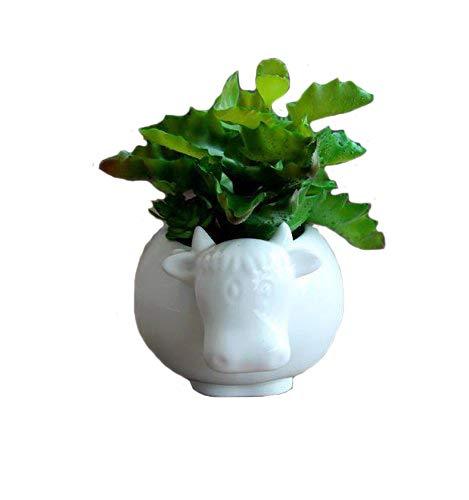 Sea Star Cow Flower Pot,Modern White Ceramic Succulent Planter Pots / Tiny Flower Plant Containers (Cow)