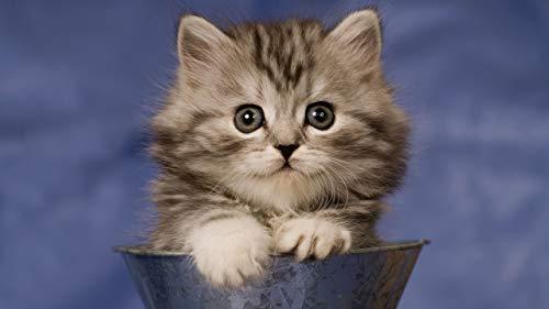 JZDTMMAN DIY MalenNachZahlen Das Süße Kätzchen In Der Tasse Erwachsene Kinder Zeichnen Anfänger Ohne Rahmen Wohnkultur Geschenke 40x50cm