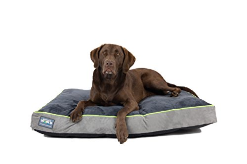 Orthopedic Dog Bed | Pure Premium Shredded Memory Foam Ideal for Aging Dogs | Waterproof Removable Washable Cover (Large (40'x28'x5')(50-80 lbs), Grey with Rave Green Trim)