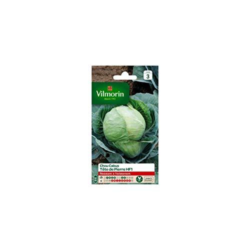 Vilmorin - Sachet graines Chou Cabus Tete de pierre HF1