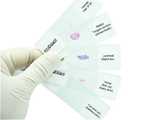 Prepared Animal Sensory Organs Microscope Slides for Biology Science Education, Pack of 5pcs Specimens by DIY-SCIENCE