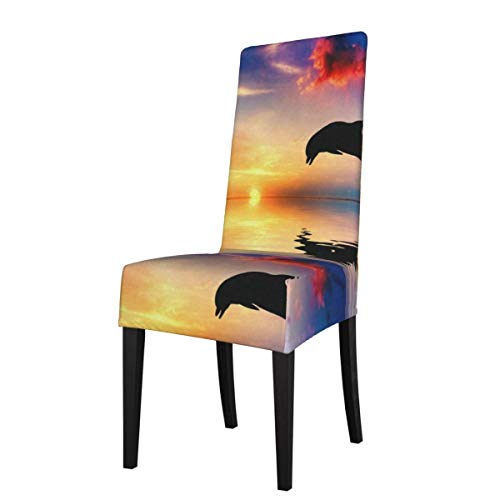 Dining Room Chair Covers Dolphin In Beautiful Sunset Glow Natural Scenery Stretch Dining Chair Slipcovers Decor Kitchen Armless Chair Seat Protector Dinner Universal High Back Chair Slip Covers Set Of