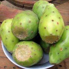 Opuntia lasiacantha Y Nopal essbare Kakteen Nopalea Saft Nopalina Samen 100 Samen