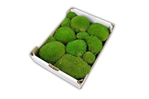 Steige Moos konserviertes Kugelmoos für Moosbilder Mooskugeln Dekomoos Moos für die Dekoration haltbares echtes Moss für die Frühlingsdeko Osterdeko Herbstdeko Deko