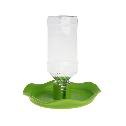 Distributore di acqua per rettili, mangiatoia per lucertola, ciotola, bottiglia