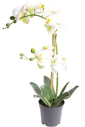 Nova-Nature künstliche Orchidee Bora (Orchideen Pflanze/Phalaenopsis) im schwarzen Kunststofftopf mit Rispen, Blättern und Luftwurzeln real Touch (Creme-weiß, ca. 50 cm / 2 Rispen)