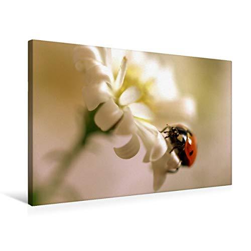 CALVENDO Premium - Lienzo (75 x 50 cm), diseño de Mariquita con Flores Blancas