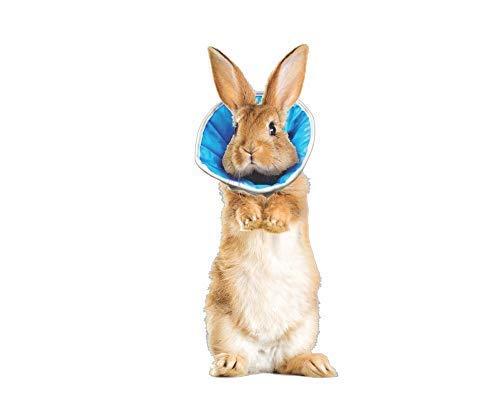Grote finale halsband voor honden, katten of konijnen, 0 (XS) - Tour de tête: 18-22cm, Blauw