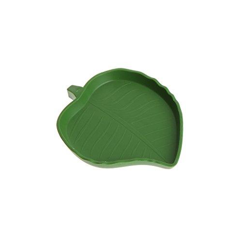 cicianco Reptiliennapf Wassernapf Kunststoff Gecko Meal Wasserschale Blattform grün