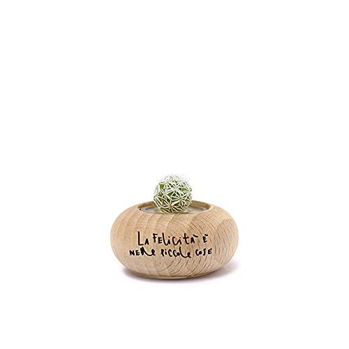 Kaki® Bonsai Original La Felicità Snowy Cactus