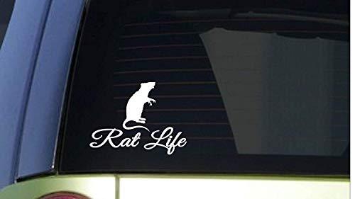 Rat Life 6