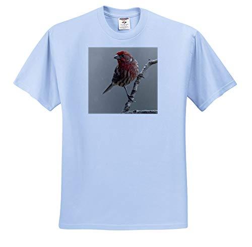 3dRose Danita Delimont - Birds - Male House Finch in Winter. - Youth Light-Blue-T-Shirt Small(6-8) (ts_345307_60)