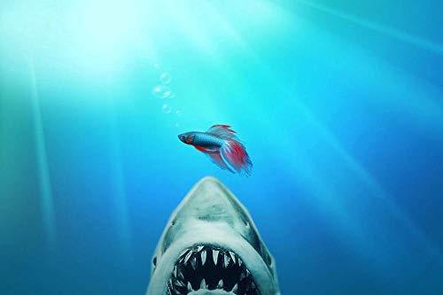 AMtxkj Animales Marinos Divertidos Tiburones y Peces de Colores, Lienzo para Pintar Poster Impresiones Arte Imágenes de Pared para Sala de Estar Decoración para-50X70CM-No Frame