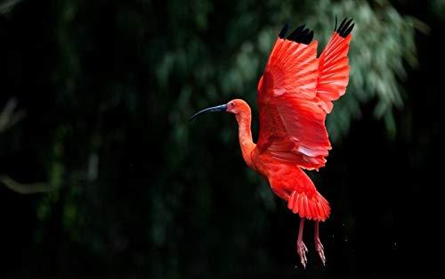 Rompecabezas De 1000 Piezas Para Adultos, Juguete Educativo Volador De Pájaro Ibis Rojo Para Niños Y Adultos, Montaje De Madera