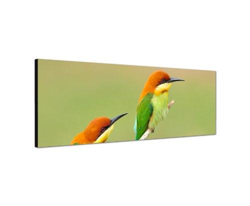 120x40 cm Panorama Wandbild Leinwand (Vögel) Panoramabild Bild Bilder Moderne Dekoration zum kleinen Preis! Bild bespannt auf echter Leinwand und Holzkeilrahmen. Made in Germany neu
