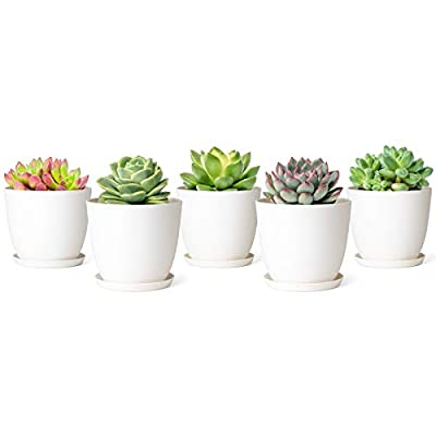 Mkono 4.5 Inch Plastic Succulent Planters Indoor Set of 5 Flower Plant Pots Modern Decorative Gardening Pot with Drainage for All Small House Plants, Flowers, Herbs, and Seeding Nursery
