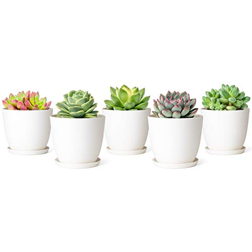 Mkono 4.5 Plastic Succulent Planters with Saucers, Indoor Set of 5 Nursery Pots Modern Flower Plant Pot with Drainage for All Small House Plants, Herbs, Foliage Plant, and Seedling, Cream White