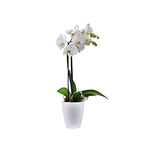 elho brussels Orchid High 12,5 Blumentopf – Rundes Pflanzengefäß in Weiß – Stilvolles Highlight für jede Wohnung – Ø 12,7 x H 15,2 cm