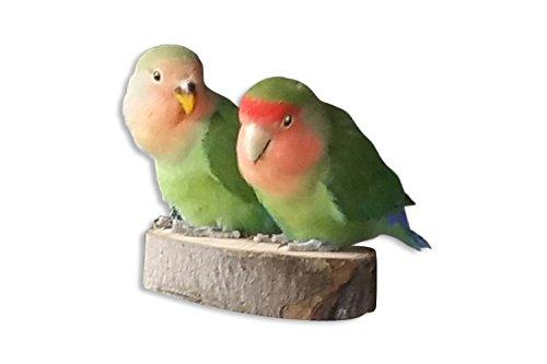 2 Astscheiben aus Wildapfel - Sitzbretter gehören in jeden Vogelkäfig