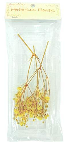 ニチフロ(Nichiflro) ハーバリウム用花材 カスミソウ イエロー