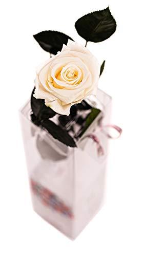 Rosen-Te-Amo, 1 rosa stabilizzata bianca con stelo (27,5 cm) e biglietto di auguri scaricabile. Fiori stabilizzati per San Valentino, regalo mamma, regalo compleanno donna o regalo nonna