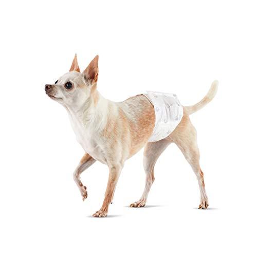 Amazon Basics - Pañal desechable para perro macho, XS, paquete de 30 unidades