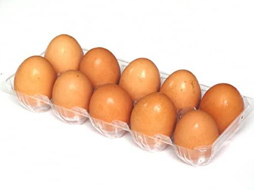 【朝市場のデイリーフーズ】濃い黄身 赤玉子 10個 x2個セット