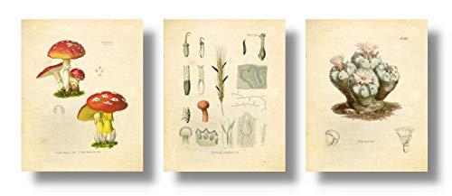 Psychedelics Hallucinogenic Psychoactive Plants Vintage Botanical Art Prints