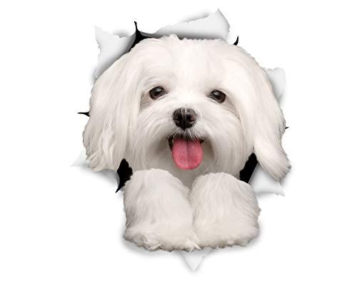 Winston & Bear 3D Aufkleber - 2er-Pack - süße Malteser für Wand, Kühlschrank maltesischen Aufkleber Hund