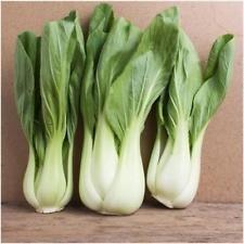 Paquet de 300 graines, Pak Choi blanc Stem Graines de chou (Brassica rapa)
