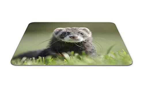 Cute Ferret Mouse Mat Pad - Polecat weasel Mustela Kids Fun Gift Computer #14219